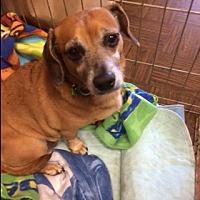 Adopt A Pet :: CHOO CHOO - Riverside, CA