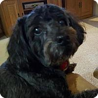 Adopt A Pet :: Casey - Goodyear, AZ