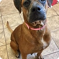 Adopt A Pet :: Rory 111119 - Joplin, MO