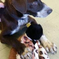 Adopt A Pet :: MINDY - Cleveland, MS