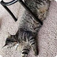 Adopt A Pet :: Mars - Stafford, VA