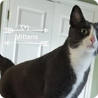 Adopt A Pet :: Mittens - Wilmore, KY