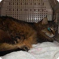 Adopt A Pet :: TARA - Long Beach, CA