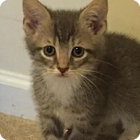 Adopt A Pet :: Hunnicutt - Stafford, VA