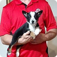 Adopt A Pet :: Oliver - South Euclid, OH