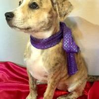 Adopt A Pet :: Amazon - Santa Fe, TX