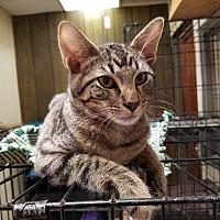 Adopt A Pet :: Havarti - Fairbury, NE
