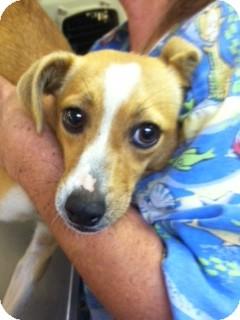 Terrier (Unknown Type, Medium) Mix Dog for adoption in Waldorf, Maryland - Sophie