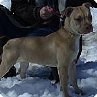 Adopt A Pet :: Zena - Roodhouse, IL