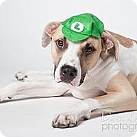 Adopt A Pet :: Hudson - Los Angeles, CA