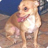 Adopt A Pet :: Emmett - Chandler, AZ