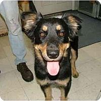 Adopt A Pet :: Shela - Winter Haven, FL