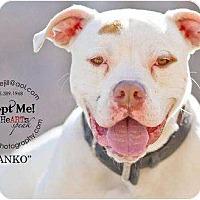Adopt A Pet :: Danko - Accord, NY
