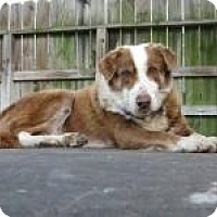 Adopt A Pet :: Earl - Stafford Springs, CT