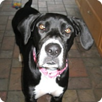 Adopt A Pet :: Molly #2 - York, PA