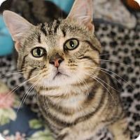 Adopt A Pet :: Edgar - Medina, OH