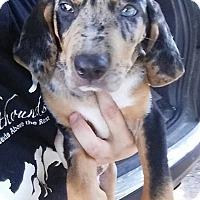 Adopt A Pet :: Nate - Gainesville, FL