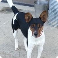 Adopt A Pet :: Hoot - Oberlin, OH