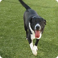 Adopt A Pet :: Scooter - West Hartford, CT