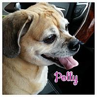 Adopt A Pet :: Polly - Greensboro, MD