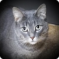 Adopt A Pet :: Bella - Sheboygan, WI