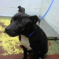 Adopt A Pet :: DEE DEE - Atlanta, GA