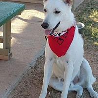 Adopt A Pet :: Artie - Montgomery, AL