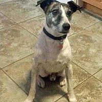 Adopt A Pet :: Arty (Sacramento) - Carmichael, CA