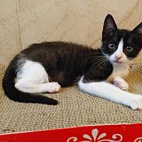 Adopt A Pet :: Sally Carrera - Brandon, FL