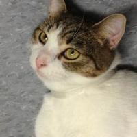 Adopt A Pet :: Cruz - Greensboro, NC