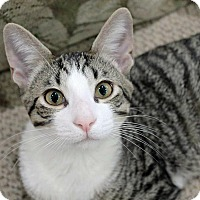 Adopt A Pet :: Turbo - Troy, MI