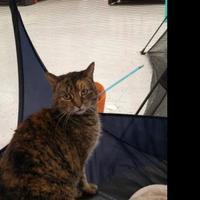 Adopt A Pet :: Tara - Warren, MI