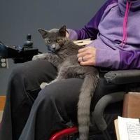 Adopt A Pet :: Carson - Carroll, IA