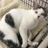 Adopt A Pet :: Reno - Washington, IA