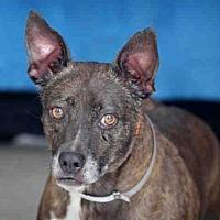 Adopt A Pet :: TINY - Downey, CA