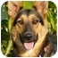 Photo 3 - German Shepherd Dog Mix Dog for adoption in Los Angeles, California - Roo von Kern