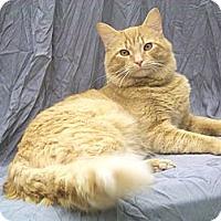 Adopt A Pet :: Ben ( Awesome) - Arlington, VA