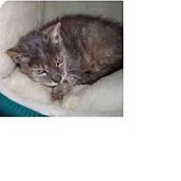Adopt A Pet :: Maggie Mae - Jenkintown, PA