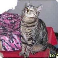 Adopt A Pet :: Traveler & Bobcat - Quincy, MA