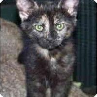 Adopt A Pet :: Comet - Davis, CA