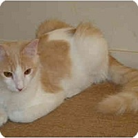 Adopt A Pet :: Angelo - Modesto, CA