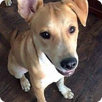 Adopt A Pet :: Eamon - nashville, TN