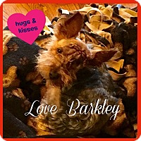 Adopt A Pet :: Barkley - Beechgrove, TN