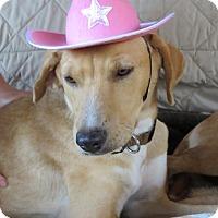 Adopt A Pet :: Annie & Ester ADOPTED - Tulsa, OK
