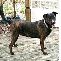 Adopt A Pet :: Athena - Oakland Gardens, NY