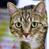 Adopt A Pet :: Melinda - Denver, CO