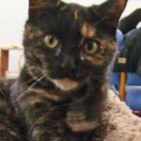 Adopt A Pet :: Estee - Greenfield, IN