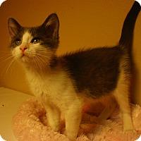 Adopt A Pet :: Yahtzee - Bridgeton, MO