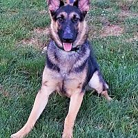 Adopt A Pet :: Harper - Kouts, IN