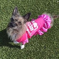 Adopt A Pet :: Shenandoah - Las Vegas, NV
